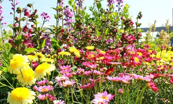 JULY GARDENING TOP TIPS