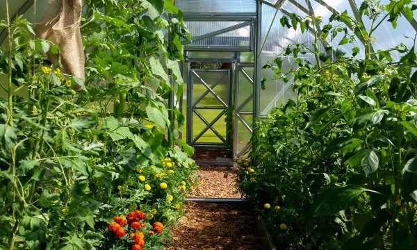 GREENHOUSE BASICS