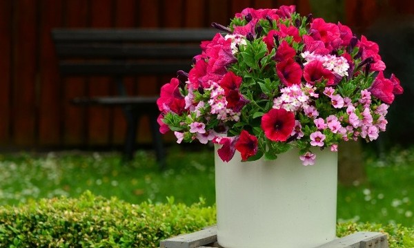 PLANTING SUMMER CONTAINERS