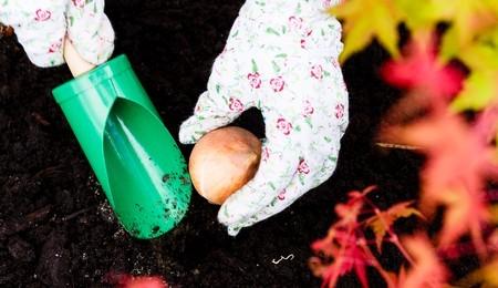 FREE Gardening Gloves & Spring Bulb Planter