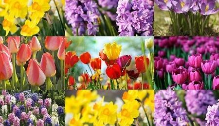 West Cork Spring Bulbs