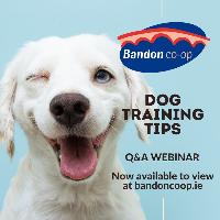 Recording of Dog Training Webinar