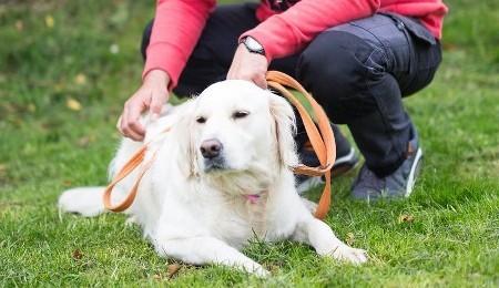 FREE Dog Training Event June 17th
