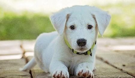 Puppy/Dog Training