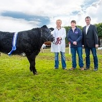 Results for Bandon Agricultural Show's Super Young Heifer Class