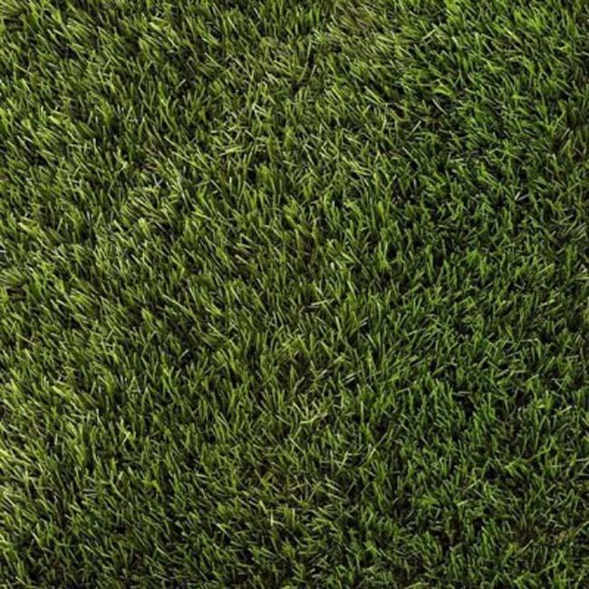ARTIFICIAL DAISY GRASS 30MM - 4MTR